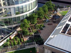 YWCA rooftop