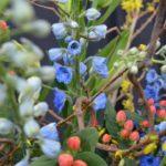 2016 Colorado Garden & Home Show